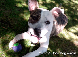 Ladys Hope Rescue: Benny
