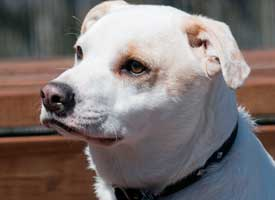 Ladys Hope Dog Rescue: Adopted