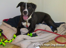 Ladys Hope Rescue: Riley
