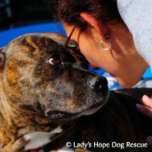 Ladys Hope Rescue: Sienna